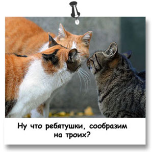 кошки с фото с названиями
