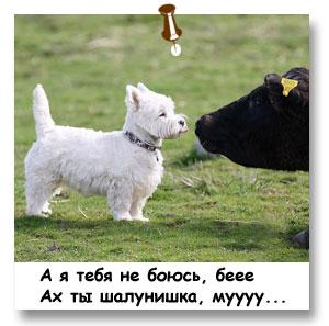овчарка среднеазиатская щенки фото