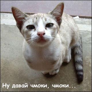 Прикольные, забавные кошки, приколы с кошками.