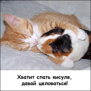http://petsik.ru/images/gallery/guineapig/bigpic/pic9.jpg