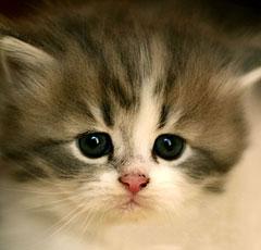 порода кошек и их фото