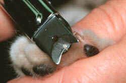 как правильно остричь когти