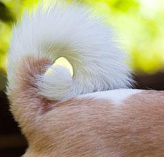 гипоаллергенные собаки картинки