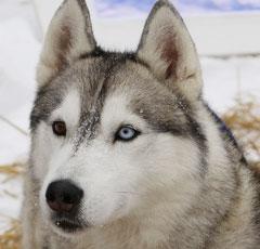 порода собак не вызывающие аллергию фото