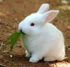 фото кролики домашние